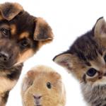 犬、猫、ハムスター